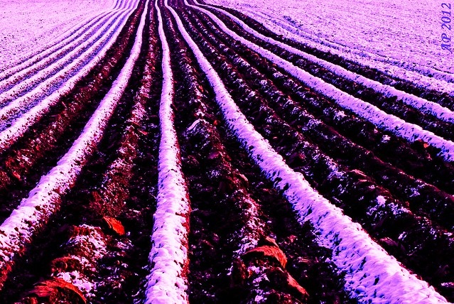 Sillons d'Hiver / Winter Furrows