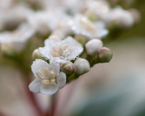 November white