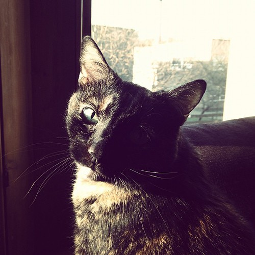 54.365: sunbather
