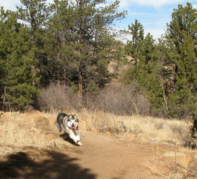 Luka running