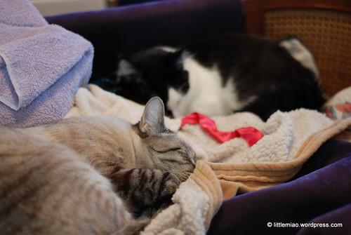 miaolings at peace 2-5-2012 2-52-30 PM
