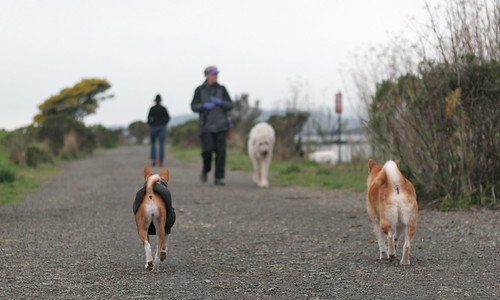 7 February 2012 The march of the butthole dogs