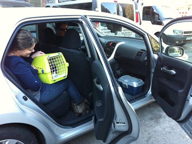 Viaje en coche: tres humanos, dos cobayas y un gato