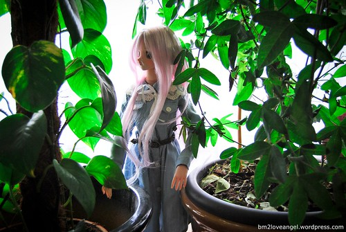 Yukino and the plants