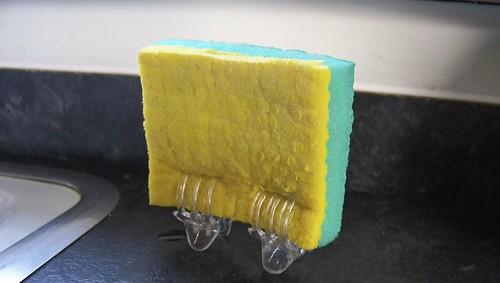 Sponge Trouble