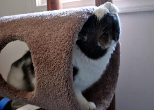 Aremids new cat tree-8