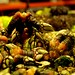 Percebes Pazo_doval-80