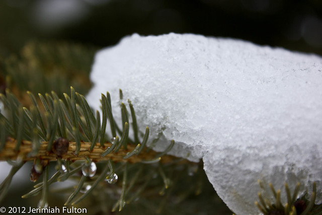 2012_Jan_17_January Snow_040
