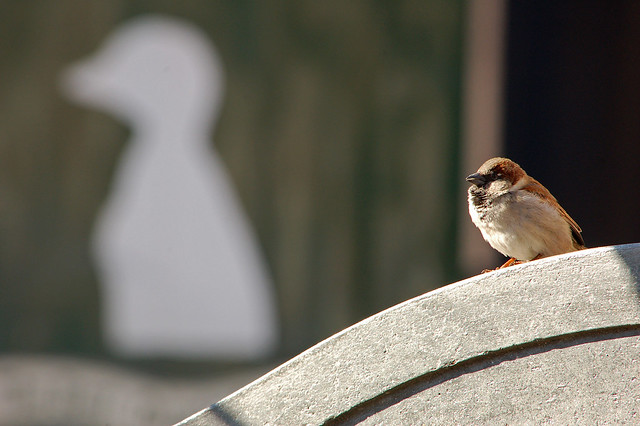 Avian Sovereign