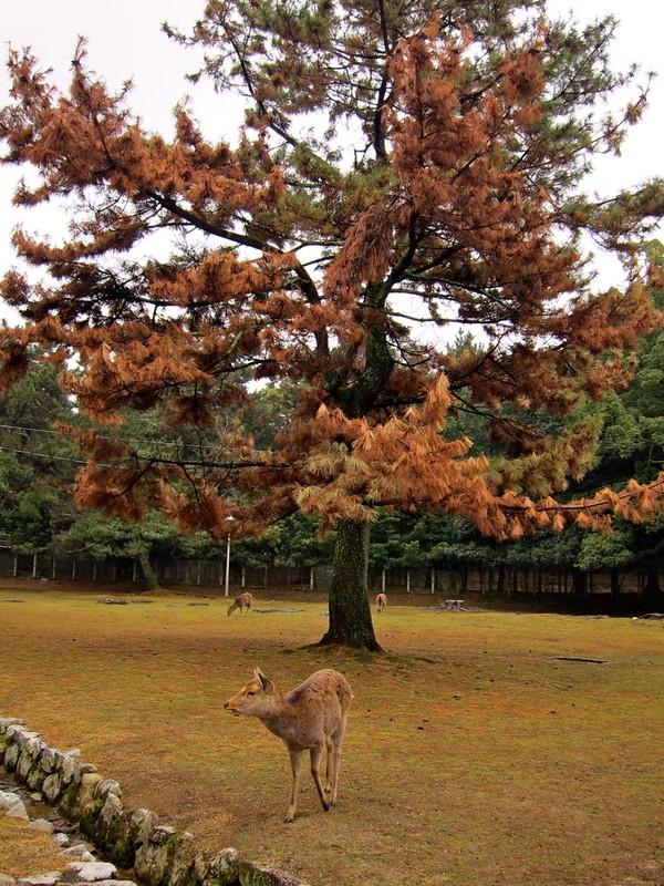 Deer again!
