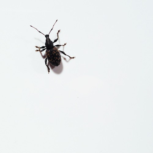 Day 156 of Project 365: Bug