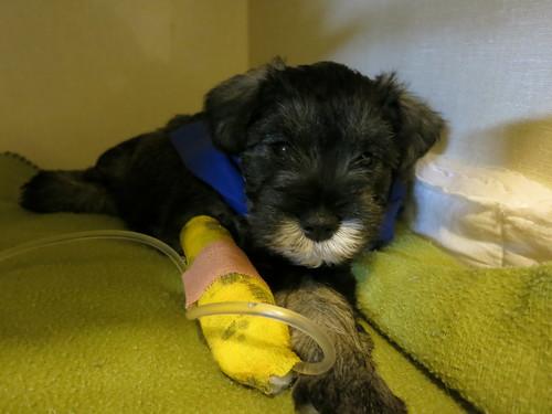 Poor sick puppy