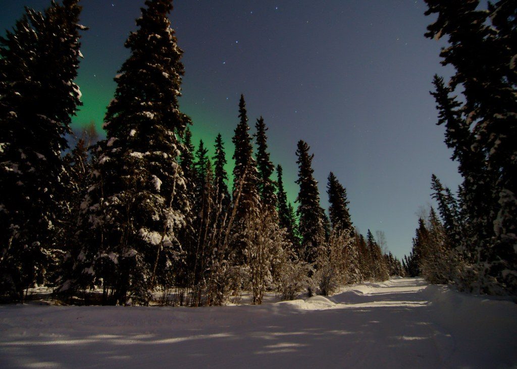A little aurora behind the trees