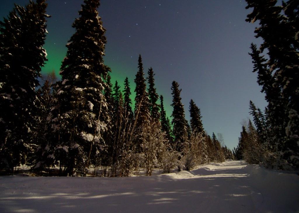 A little aurora behind the trees