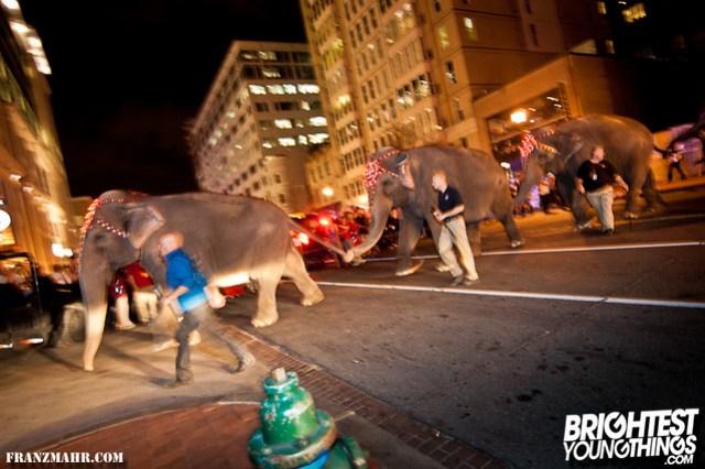 12-03_elephants119-120
