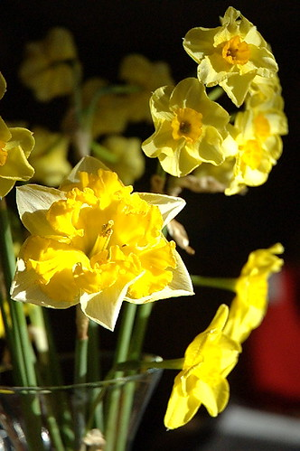 Daffodils on a kitchen table