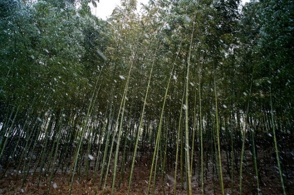 120218_bambooForest01