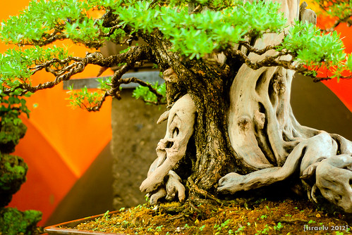 Bonsai #1 by {israelv}