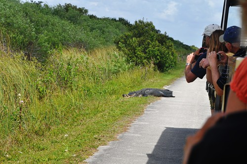 Snapping this Gator's Good Side, Shark Valley, Everglades National Park, Fla., Feb. 27, 2012