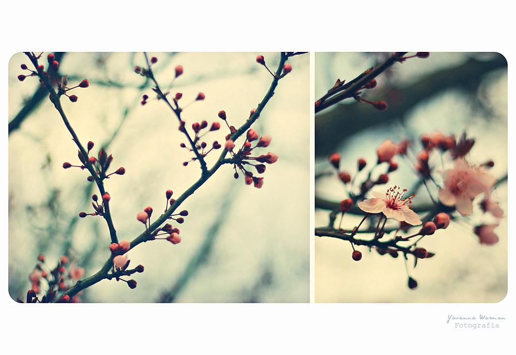Y le robé a la primavera su primera flor ... [Explore]