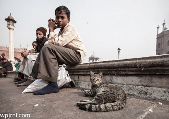 jama masjid cat and kid