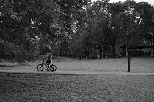 The Boy & The Park