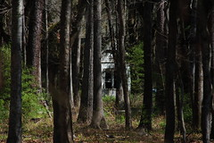 Boynton House through the Woods