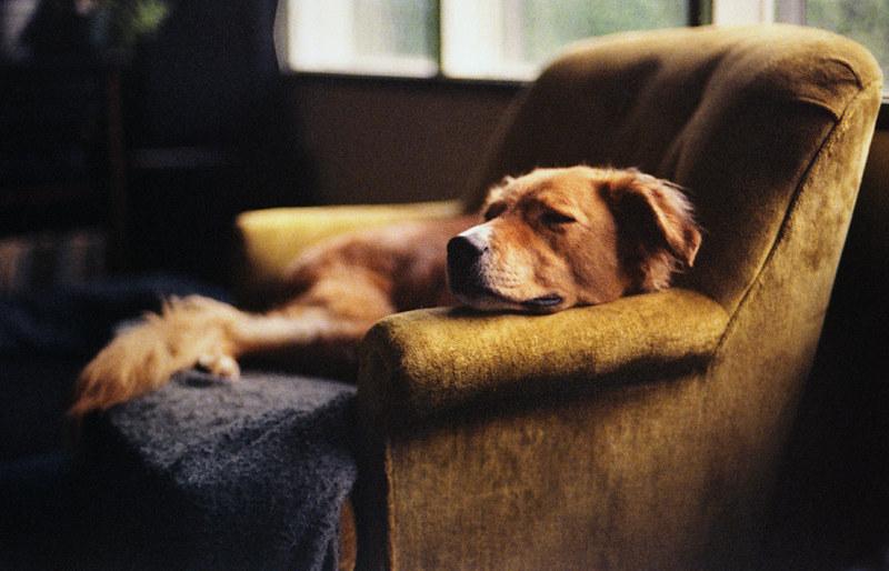 dreams of dogs