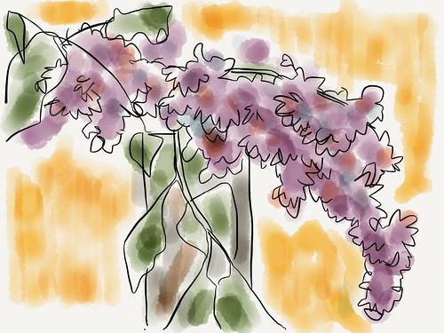 Lilacs by jmignault