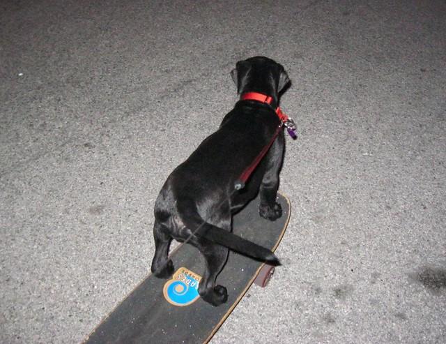 Midnight Skate