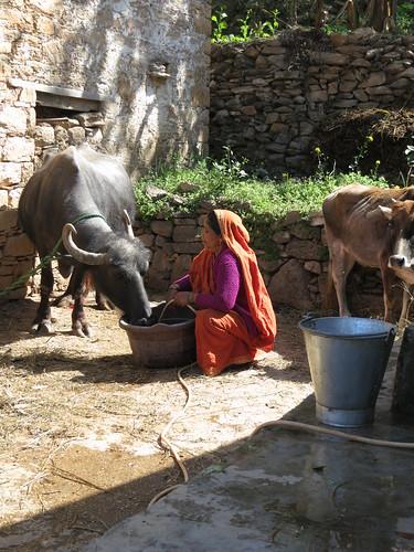 Gita Kothari, crop-livestock farmer in India's northern state of Uttarakhand