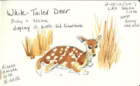 20120225_deer1
