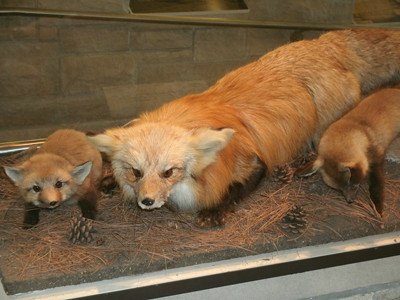 20120428_FOX_DISPLAY