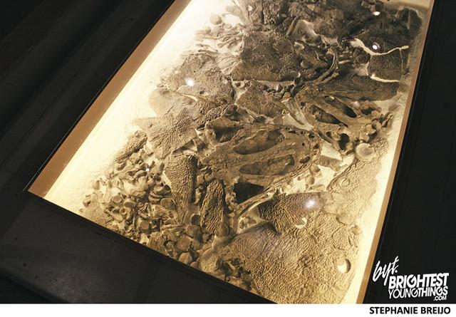 Smithsonian Dinosaur Exhibit Photos Brightest Young Things Stephanie Breijo20