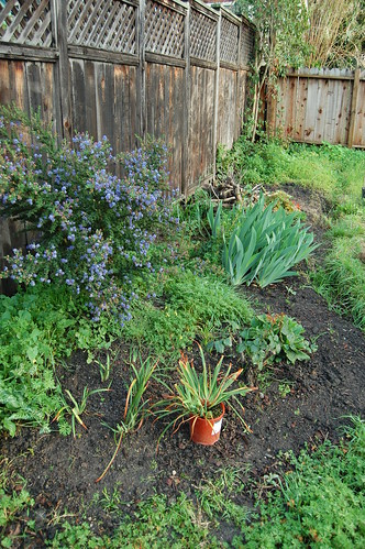 Back Garden Fence Planting