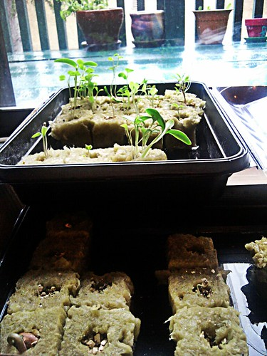 Seedlings keeping safe from the rain by Jevie Buck