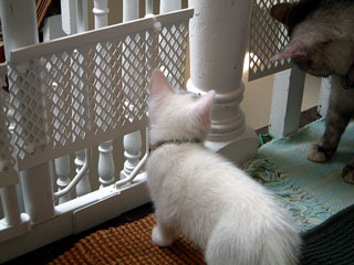 kylietess-porch