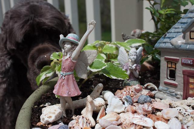 Sam Checking out the Fairies. :-)