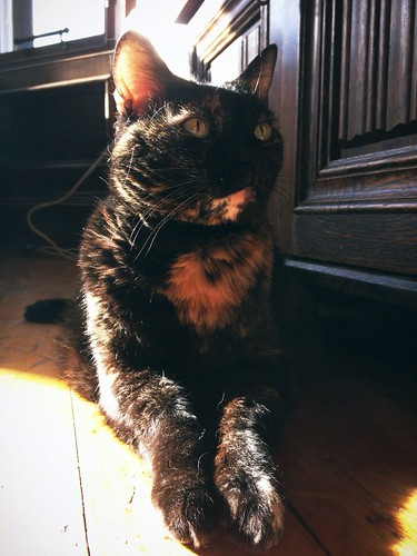 Day 94 of Project 365: Sunbeam by cygnoir