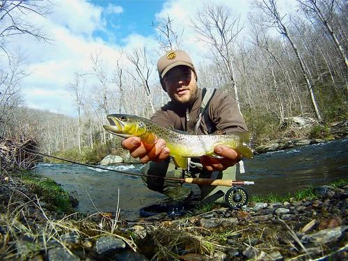 Gunpowder Brown Trout Fly Fishing