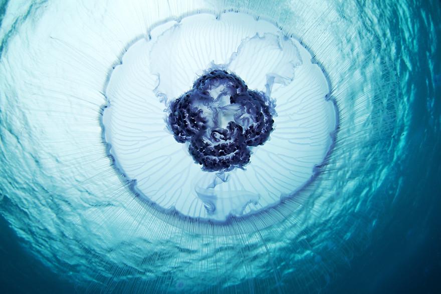 Biodiversidade marinha, para parecermos insignificantes  (3/6)
