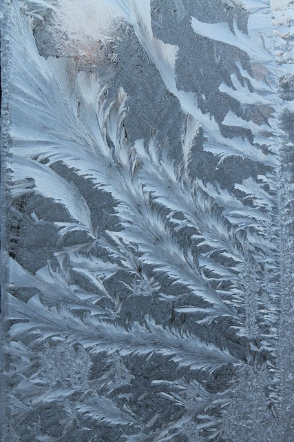 Frost feathers on the window, Lužec nad Vltavou, Czech Republic