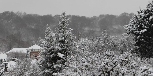 UK snow scene. The tree on the right hand side is a strong framing feature.
