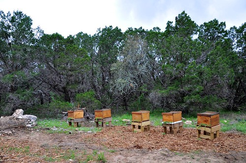 Hives at the Marriott in SA