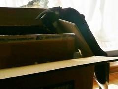 drobo fs 梱包箱とムサシ