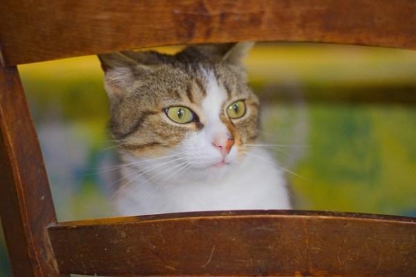 Lili sur une chaise