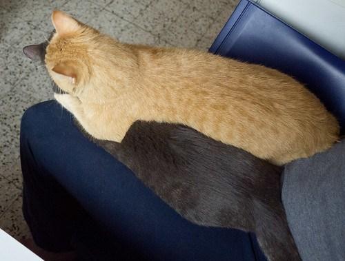 New Cats 30.jpg