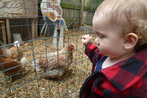 Fowl Contemplation