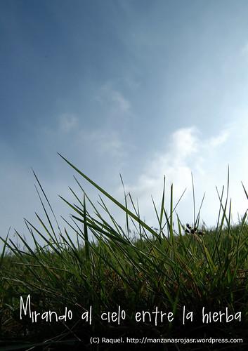 Mirando al sol entre la hierba