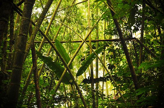 6979849389_baec0ede8c_o Jardin Botánico del Quindío - Armenia, Colombia Colombia Zona Cafetera  Zona Cafetera Quindio Nature Mariposario Guadua Garden Colombia Butterfly Botanical Bamboo